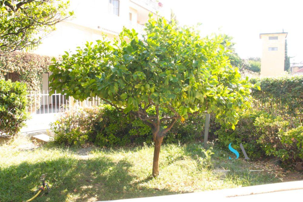 saletta ST115(10 giardino