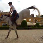saletta SLB118(14 sport equitazione Sanremo